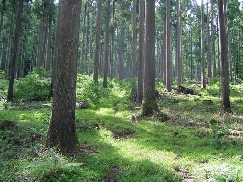 新たな地域と林業、農業の形(対談) 竹本吉輝x西辻一真