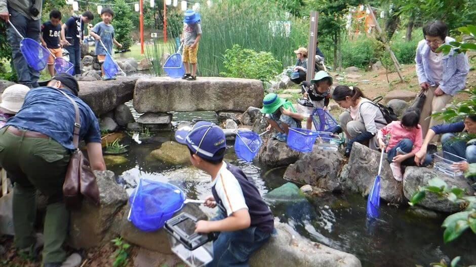夏休み自由研究・森の昆虫&生物の観察・研究/小学低学年