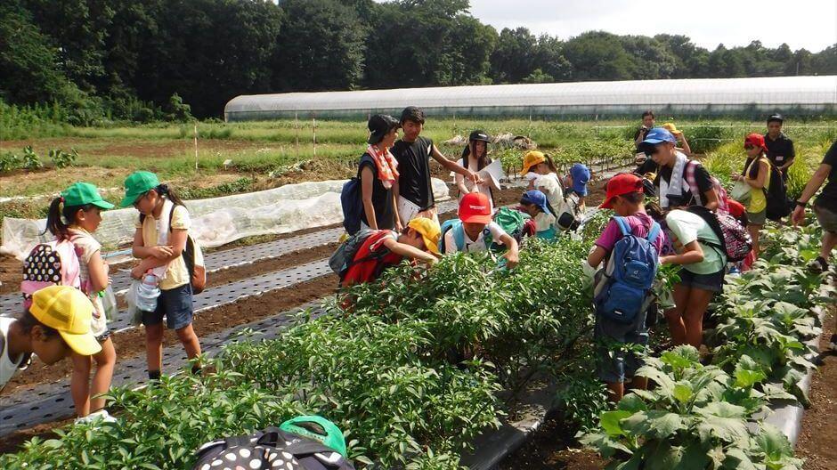 夏休み自由研究・土の研究+夏野菜収穫体験/小学高学年